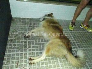 Morte de cão comoveu participantes da corrida de rua