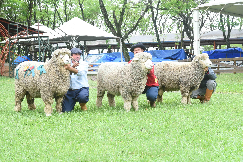 Ovinos tipo lã movimentam Expofeira